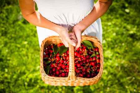 freshly picked: Beautiful young woman holding a basket filled with freshly picked cherries