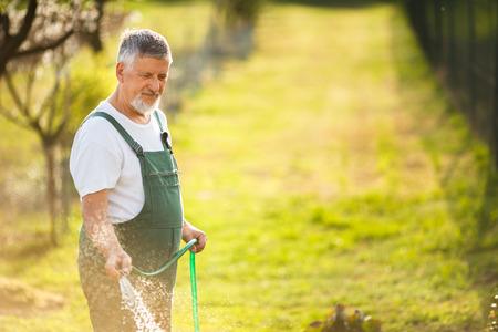 dibble: Portrait of a handsome senior man gardening in his garden