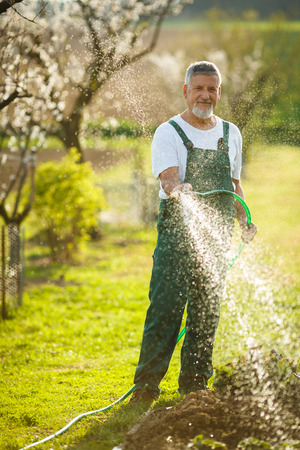 Portrait of a handsome senior man gardening in his garden, on a lovely spring day  Stock Photo