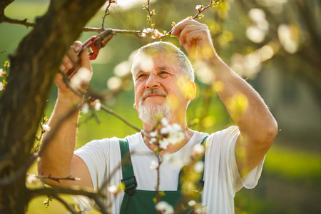 dibble: Portrait of a handsome senior man gardening in his garden, on a lovely spring day  Stock Photo