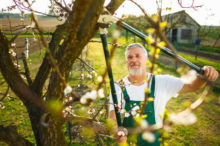 dibble: Portrait of a handsome senior man gardening in his garden, on a lovely spring day