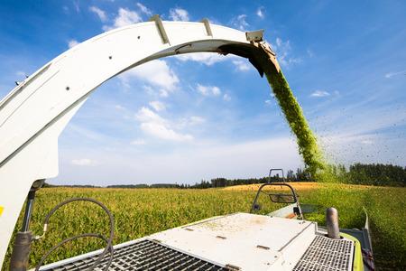 Modern combine harvester unloading green corn into the trucks photo