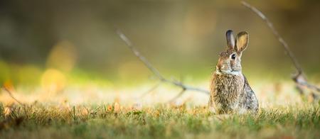 campo de flores: Conejo lindo en la hierba