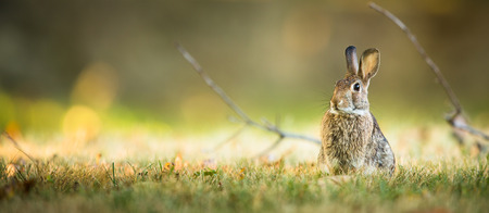 Mignon lapin dans l'herbe Banque d'images - 35026555