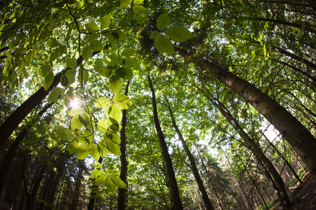 intentionally: spring forest treetops (intentionally distorted image; shot with a fisheye lens)