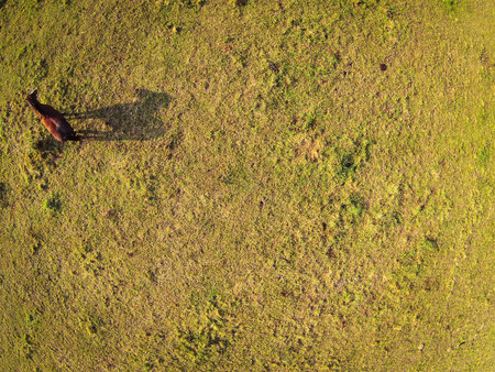 Aerial view over a pasture with a horse casting a shadow photo