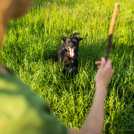 fetch: Walking the dog - throwing the stick to fetch to this eager companion