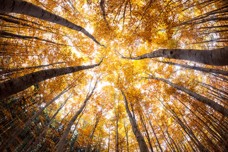 distorted image: autumn forest treetops (intentionally distorted image; shot with a fisheye lens) Stock Photo