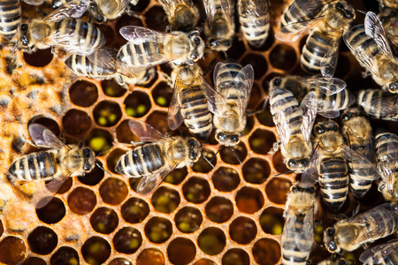 joint effort: Macro shot of bees swarming on a honeycomb Stock Photo