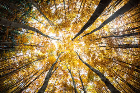 intentionally: Autumn forest treetops (intentionally distorted image; shot with a fisheye lens) Stock Photo