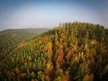 Autumn forest aerial view photo