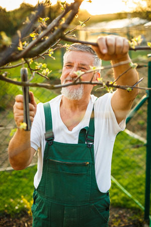 garden tool: Portrait of a handsome senior man gardening in his garden, on a lovely spring day (color toned image)