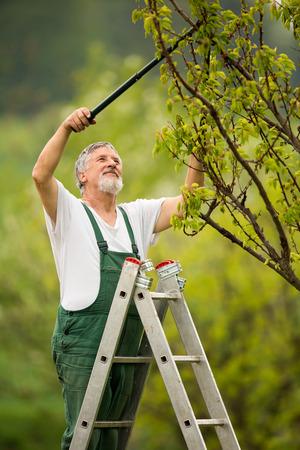 dibble: portrait of a senior man gardening in his garden (color toned image)