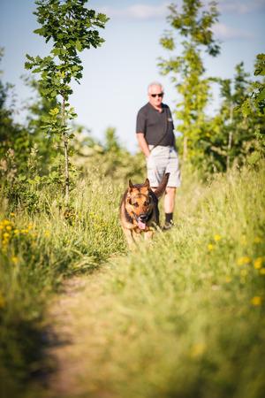 alsatian: Beautiful German Shepherd Dog (Alsatian) outdoors Stock Photo