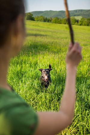 eager: Walking the dog - throwing the stick to fetch to this eager companion