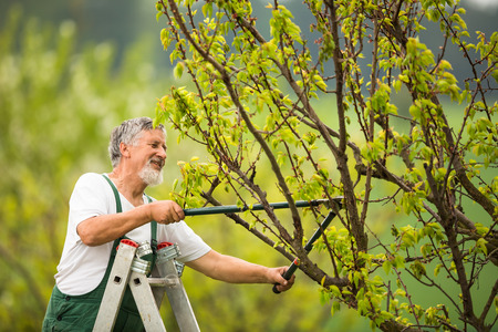Leitenden Mann im Garten in seinem Garten (Farbe getönt Bild) Lizenzfreie Bilder - 44973775