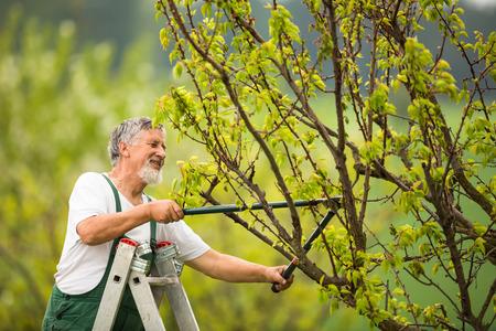 Senior man tuinieren in zijn tuin (kleur getinte afbeelding)