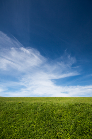 afield: lovely summer field with blue sky