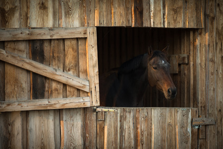 horse stable: Horse in a stable