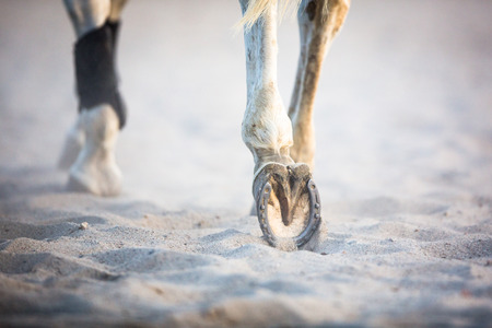 Feet of a running horse Standard-Bild