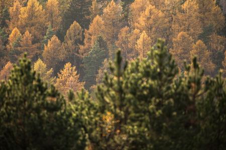 autumn color: Autumn landscape (shallow DOF; color toned image)