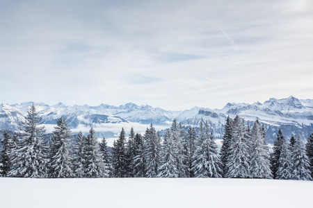 wintry landscape: Splendid winter alpine scenery with high mountains and trees covered with snow