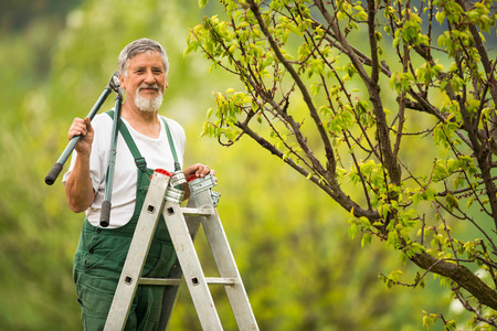dibble: Senior man gardening in his garden (color toned image)