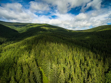 Aerial view of mountains covered with coniferous forests Stock Photo