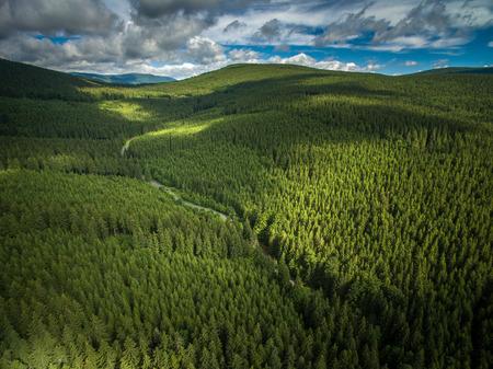 Vue aérienne des montagnes couvertes de forêts de conifères Banque d'images - 60593348