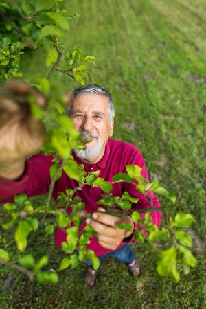 Portrait eines älteren Mannes im Garten in seinem Garten (Farbe getönt Bild) - den Zustand seiner Obstgarten Obstbäume Kontrolle