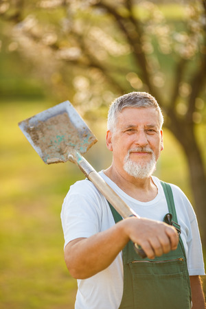 mattock: Portrait of a handsome senior man gardening in his garden, on a lovely spring day (color toned image)