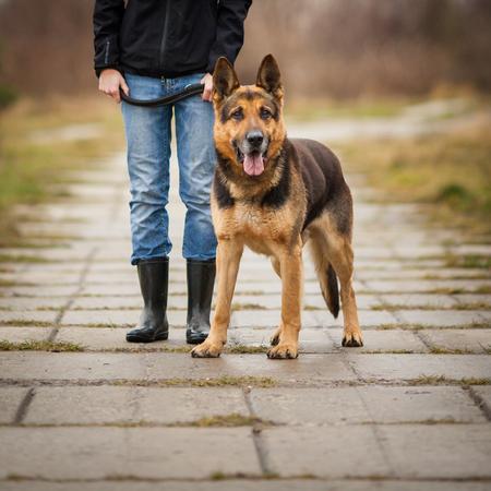 obedient: Master and her obedient (German shepherd) dog