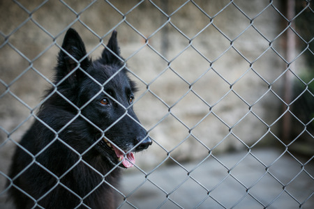 waiting convict: Shelter for homeless dogs - dog behind in a cage waiting for a new owner to adopt him Stock Photo