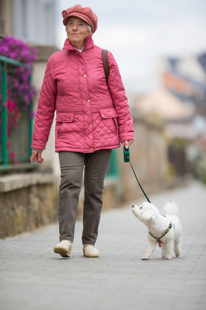 beagle terrier: Senior woman walking her little dog on a city street; looking happy and relaxed (shallow DOF)