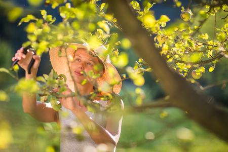 grass cutting: Pretty, young woman gardening in her garden, cutting branches, preparing the orchard for the winter Stock Photo