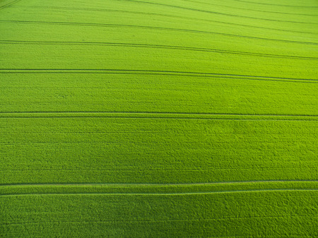 Arial view of green field Stock Photo