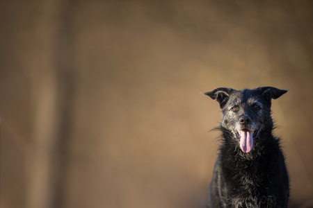 Cute black dog outdoors looking at the camera (with lots of copy space) Stock Photo