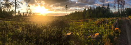 Panorama of a coniferous forest in warm late evening light with setting sun