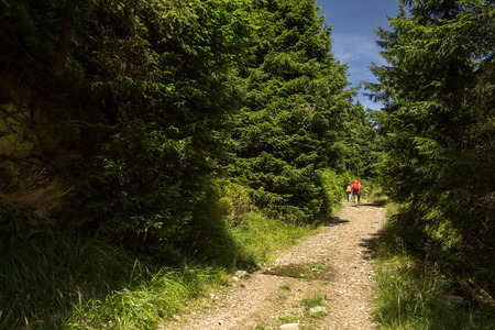 People hiking - going through a lovely alpine forest path