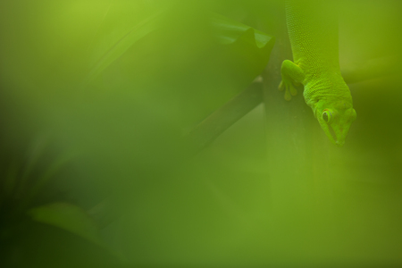 Close up view of a green Gecko in natural environnement Stock Photo