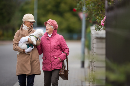 Senior woman walking her little dog on a city street with her granddaughter; looking happy and relaxed (shallow DOF) Standard-Bild