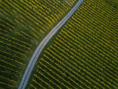 Aerial view over vineyard fields in Europe