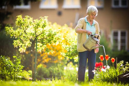 彼女の素敵な庭でいくつかのガーデニングをしているシニア女性 - 植物に水をやる