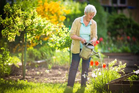 Senior woman doing some gardening in her lovely garden - watering the plants