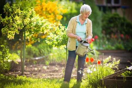 Senior woman doing some gardening in her lovely garden - watering the plants