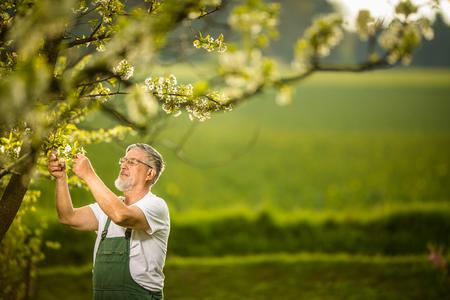 Porträt eines älteren Mannes, der im Garten arbeitet, sich um seinen schönen Obstgarten kümmert und sich aktiv über seinen Ruhestand freut Standard-Bild - 102164436