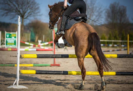 Young woman show jumping with horse Imagens