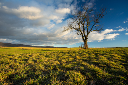 Big tree on green meadow landscape with blue sky with copy space 版權商用圖片