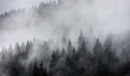 Las we mgle jako tło. Piękny naturalny krajobraz w okresie letnim