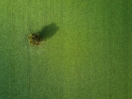 Lovely green filed aerial photo